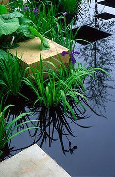 modern water garden...stunning!