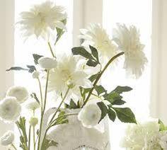 Image result for white dahlia