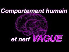 Nerf Vague, The Nerve, Physiology, Behavior