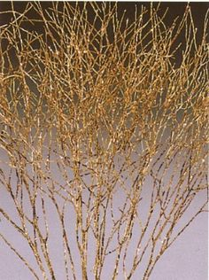"""Green Earth Accents Winter Cress Gold Sparkle - 21"""" Tall-add to arrangements."""