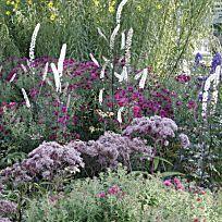 Plants for the dry perennial garden – # for … – Flower Ideas Backyard Plants, Cottage Garden Plants, Landscaping Plants, Sun Garden, Flower Landscape, Garden Landscape Design, Plant Projects, Fun Projects, Cool Landscapes