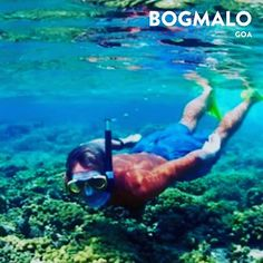 BOGMALO is a tiny fishing village located at a distance of 5 kilometers from Goas Dabolim airport & the best location for snorkelling. But the availability of snorkeling is limited to certain months every year and if you plan to do snorkeling on your tour of Goa then check for the availability and plan accordingly.   Photo by: https://ift.tt/2IAuseK  . . . . . #loveindiaagain #anokhaindia #pintrip #wanderlust #nature #trip #travelindia #travelgram #vacation #indiatravels #instatravel…