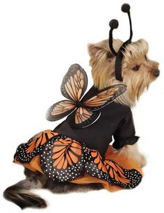 Zack & Zoey Monarch Butterfly Costume - Dog Halloween Costume