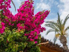 20 Beautiful Climbing Plants for a Stunning Pergola - Garden Lovers Club Pergola Garden, Pergola Canopy, Pergola Swing, Pergola Plans, Pergola Kits, Pergola Ideas, Patio Ideas, Free Standing Pergola, Vinyl Pergola