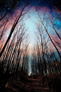 Winter tide forest with super nova night sky. Great Pictures, Cool Photos, Beautiful Pictures, Walk In The Woods, Plein Air, Night Skies, Beautiful Landscapes, Beautiful World, The Great Outdoors