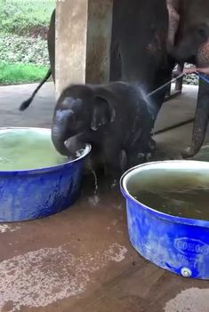 A Cute And Funny Baby Elephant Videos Compilation Cute Little Animals, Cute Funny Animals, Cute Dogs, Cute Animal Videos, Cute Animal Pictures, Cute Creatures, Animal Memes, Animals Beautiful, Animals And Pets