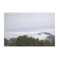 #asturias #asturigers #asturiasparaisonatural #asturias_ig #asturfoto #asturnature #asturiasgrafias #asturiasgram #asturies #summertime #summer #veraneo #igers #ig #igerasturias #photooftheday #picoftheday #niebla #fog #paraisonatural