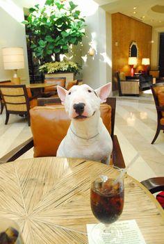 """I'll have steak, and pork chops."" https://www.facebook.com/TuggBullTerrier"