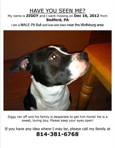 MISSING ~~~~ PENNSYLVANIA ~~~~ Ziggy went missing on 12/16/12 from Bedford, PA.  ~~ male pibble last seen in the Wolfsburg area ~~ a sweet good natured #dog ~ the family is desperately trying to find their #lost pet.  Please call Ziggy's family at 814.381.6768 if you see / find / or know where he is.