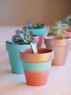 DIY Painted Pots Succulent Project | Copper, Pink and Teal painted terracotta pots.