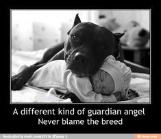 Pitbulls, a different kind of guardian angel. Never blame the breed......