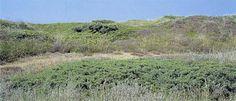 *Kystklitter med enebær. *Kystklitter med Juniperus spp..  Klitlandskab med større sammenhængende bevoksninger af ene. Tranum Strand, Nordvestjylland. Foto: Bert Wiklund.  Naturtypen forekommer spredt på mindre arealer, hyppigst i Vest- og Nordjylland. Eksempler på naturtypen findes ved Vandplasken, Skallerup Klit og Rødhus Klit i Nordvestjylland.  * angiver naturtyper, som EU prioriterer at beskytte.