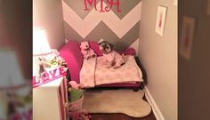 Family Turns Closet Into A Bedroom For Their Dog https://plus.google.com/+KevinGreenFixedOpsGenius/posts/iQejPusyRmw
