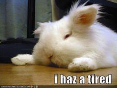 i feel you, fluffy bunny. i feel you....soccer,gymnastics,soccer again....oh yeah and basketball.......