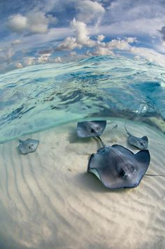 Cayman Islands: Stingray City these super large creatures skim over you like butta !