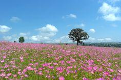 Campo de flores silvestres.