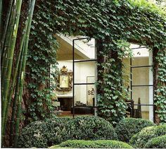 iron windows and ivy!