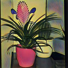 #botanical #floral #florals #flower #flowermagic #floweroftheday #flowerporn #flowers #flowerslovers #flowersofinstagram #flowerstagram #flowerstyles_gf #green #insta_pick_blossom #instablooms #nature #petal #petals #plants #tagsforlikes #piante #fiori #colori #colorgram #giacomaleopardart