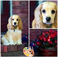 Portraits by NC #Cocker #Spaniel custom painted #pet #Portraits from your Photo https://portraits-by-nc.com/blogs/news/cocker-spaniel-custom-painted-portrait