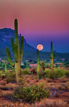 "travelandseetheworld: ""Sunset in the beautiful Sonoran Desert near Chandler, Arizona - photography by Saija Lehtonen """