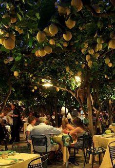 Da Paolino restaurant in Capri Italy lemon trees European Summer, Italian Summer, Dream Vacations, Vacation Spots, Italy Vacation, Places To Travel, Places To Go, Summer Dream, Northern Italy