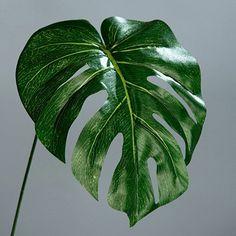 Philodendron Baumfreund Blatt Wedel Kunstpflanze künstliche Blumen 56 cm