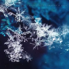 Nature is full of genius, full of the divinity; so that not a snowflake escapes its fashioning hand - Henry David Thoreau Sylvia Cook Photography I Love Snow, Winter Love, Dark Winter, All Nature, Winter Beauty, Snow Queen, Winter Solstice, Macro Photography, Winter Photography