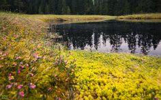 Molhașurile de la Izbuce – Turbăria Apusenilor   Bihor in imagini Mountains, Country, Nature, Travel, Park, Naturaleza, Viajes, Rural Area, Destinations