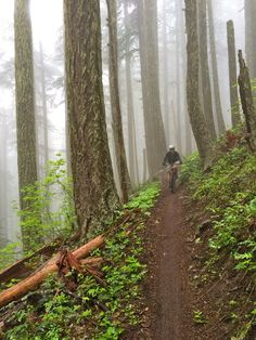 17K in a Day–Adventures in Oakridge, Oregon | Singletracks Mountain Bike News