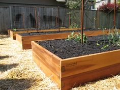 Raised Vegetable Garden-yes please and thank you from my back!