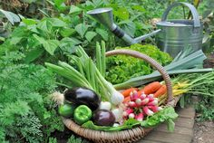 10 Vegetable Gardening Mistakes You Might Be Making | Mental Floss