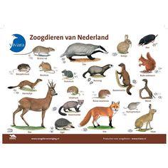 Zoogdieren van Nederland Forest Creatures, Fauna, Vikings, Wildlife, Comics, School, Illustration, Dutch, Kids
