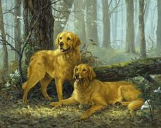 Linda Picken Art Studio / The Two Goldens. Hunting Drawings, Farm Art, Crazy Dog Lady, Puppy Pictures, Puppy Pics, Dog Travel, Dog Portraits, Dog Art, Mans Best Friend