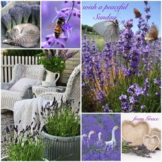 Have a blessed ... lavender Sunday ✨