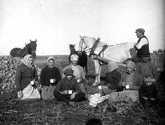 Matrast under rovskörden i Mälby, Frösthults socken, Uppland, sannolikt 1910-tal.