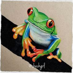 My colored pencil drawing. Follow me on Instagram: skechgrl :) #art #drawing #sketch #illustration #animal #frog