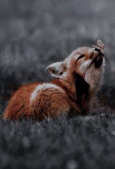 Baby fox 🦊✨