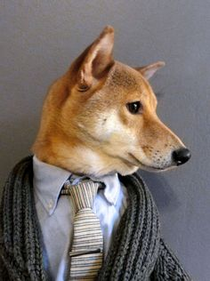 'Menswear Dog' blog turns Shiba Inu into viral style icon....hmmm :)