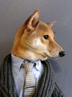 'Menswear Dog' blog turns Shiba Inu into viral style icon....hmmm :)
