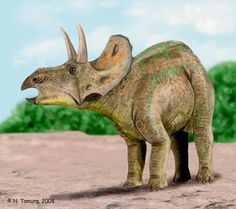 Centrosaurus apertus, a ceratopsian from the Late Cretaceous of North America