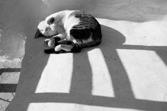 Boston Terrier, Stars, Fall, Dogs, Animals, Autumn, Boston Terriers, Animales, Fall Season