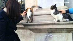 Sweet Cats in Istanbul Istanbul, Funny Animals, Cats, Sweet, Candy, Gatos, Funny Animal, Hilarious Animals, Cat