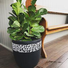 Porch Plants, Potted Plants, Indoor Plants, Indoor Flower Pots, Flower Pot Design, Earth Design, Diy Bottle, Clay Design, Plant Pots