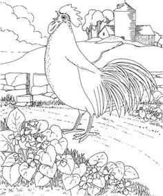Gallina Colorada y Violetas de Rhode Island Dibujo para colorear