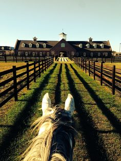 HORSE BARN OF MY DREAMS!  *not to mention what a gorgeous perspective for a pic