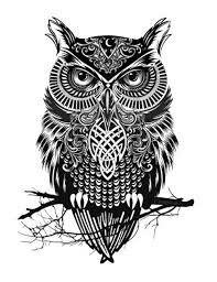 Owl geometrical