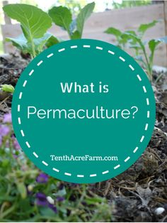 What is Permaculture? Permaculture is a buzz word that is heard frequently in gardening and homesteading circles, but what does it mean?