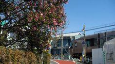 @cherub_chiki 下北沢2号踏切前の素敵なおうちのカイドウの花も急いで花開いて、小田急線との別れを惜しんでいます。 #シモチカ... on Twitpic