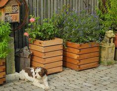 Pflanztröge Einfahrt auf Pflaster mit Hund