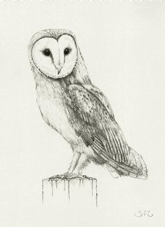Barn Owl Drawing Print. $9.00, via Etsy.